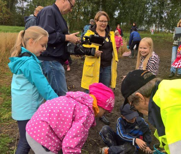 Taipalsaaren kirkonkylän koulun oma perunamaa sadon korjuu tapahtui 13.-14.9.2017 sekä sen jälkeen  vielä koululaisten omat perunapidot omista potuista 23.9.2017